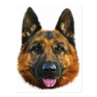 German Shepherd Alsatian K-9 Dog Postcard