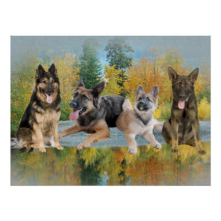 German Shepherd An Autumn Day Poster