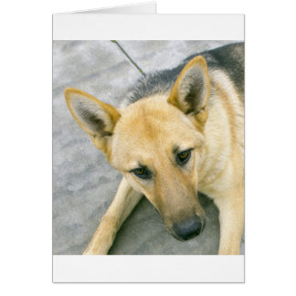 german-shepherd-black and cream card