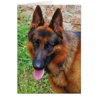 german-shepherd-black and red 2 card