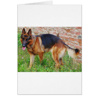 german-shepherd-black and red full card