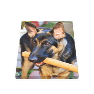 German Shepherd by Shirley Taylor Canvas Print