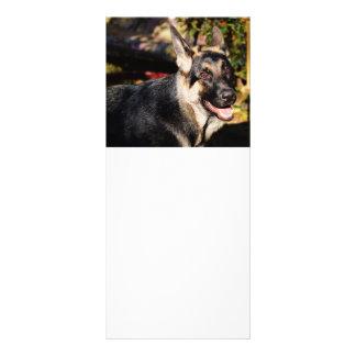 German Shepherd by Shirley Taylor Full Colour Rack Card