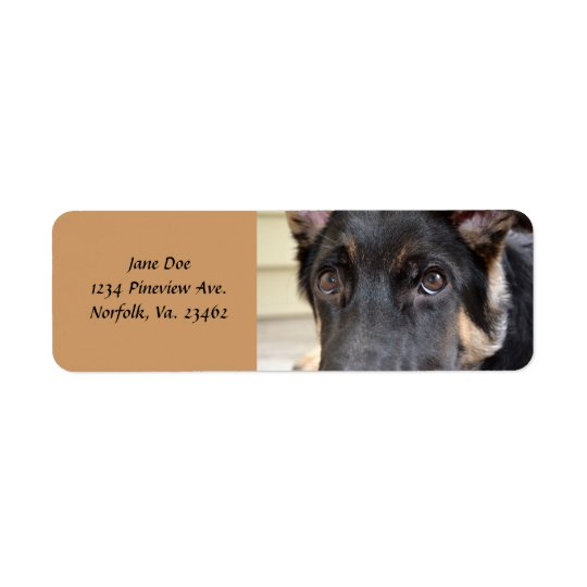 German Shepherd by Shirley Taylor Return Address Label