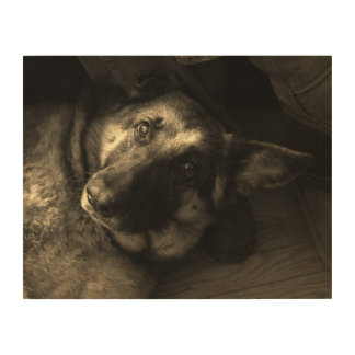 German Shepherd Days Wood Wall Art