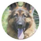 German Shepherd decorative plate