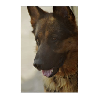 German shepherd dog acrylic wall art