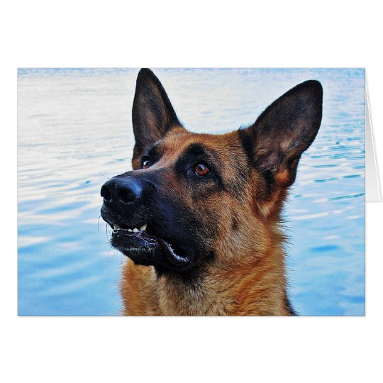 German Shepherd - Dog card