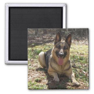 German Shepherd Dog Picture Magnet
