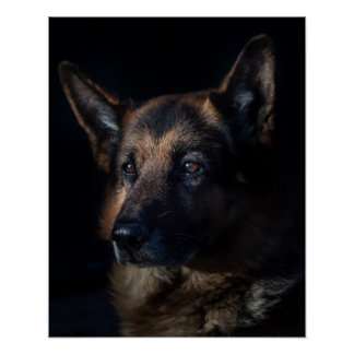 German shepherd dog poster