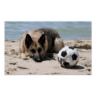German Shepherd Dog With Soccer Ball Poster Print