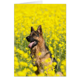 German Shepherd in mustard seed greeting card