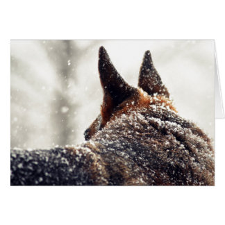 German Shepherd Photo Card