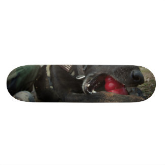 German Shepherd Playing With Dog Toy Skateboard Deck