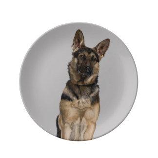 German Shepherd Porcelain Plate