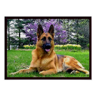 German-Shepherd Poster