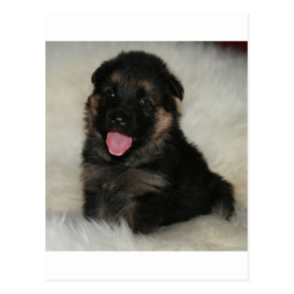 "German Shepherd Puppy ""Imagine"" Postcard"