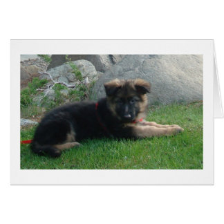 german shepherd puppy laying 2.png note card