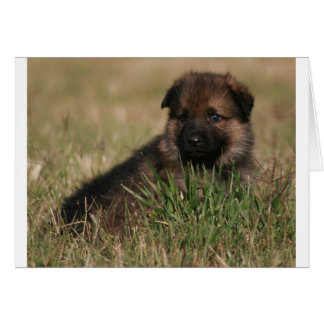 "German Shepherd Puppy ""The Lookout"" Card"