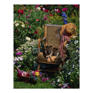 German Shepherd Pups Poster Garden