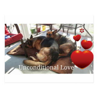 "German Shepherd ""Unconditional Love"" Postcard"