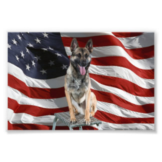 German shepherd usa - patriotic dog - usa flag photo print