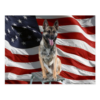 German shepherd usa - patriotic dog - usa flag postcard