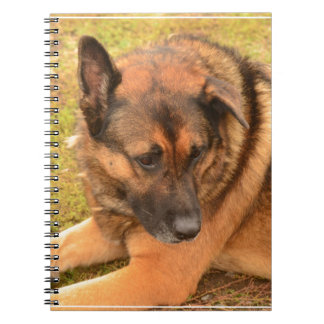 German Shepherd with One Floppy Ear Spiral Note Books