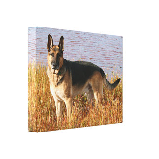 German Shepherd Wrapped Canvas Print