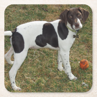 German_short_haired_pointer_puppy Square Paper Coaster