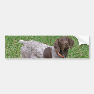 German Shorthaired Pointer  Bumper Stickers