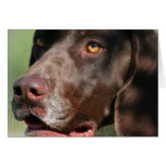German Shorthaired Pointer Card