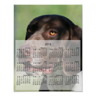 German Shorthaired pointer dog 2013 calendar print
