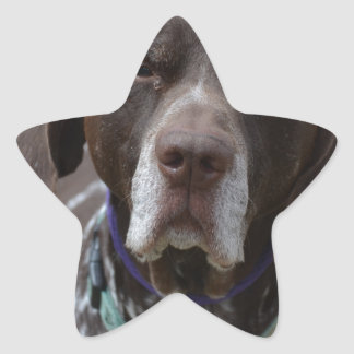 German Shorthaired Pointer Dog Star Sticker