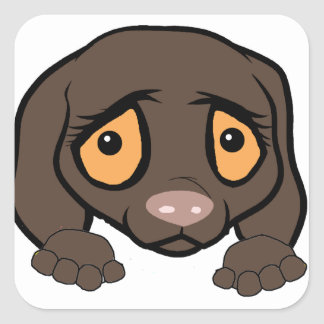 german shorthaired pointer liver peeking square sticker