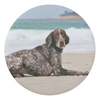 German Shorthaired Pointer - Luke - Riley Eraser
