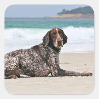 German Shorthaired Pointer - Luke - Riley Square Sticker