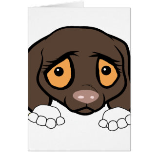 german shorthaired pointer white and liver peeking card