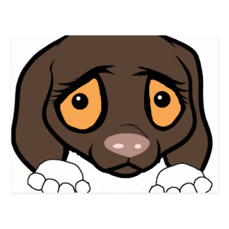 german shorthaired pointer white and liver peeking postcard
