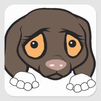 german shorthaired pointer white and liver peeking square sticker
