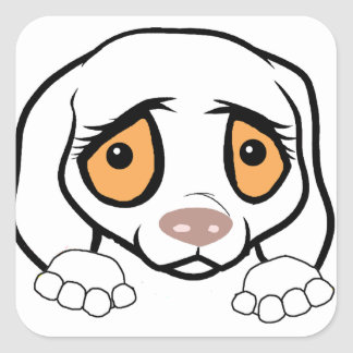 german shorthaired pointer white peeking square sticker