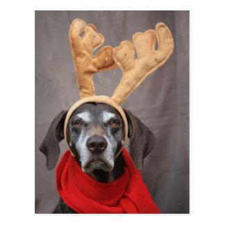 german shorthaired reindeer postcard