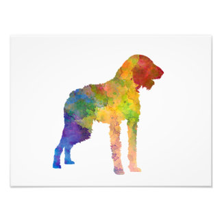 German Wirehaired Pointer in watercolor Photo Print