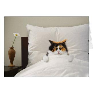 Get Well Cat Card