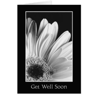 Get Well - Gerber Daisy Greeting Card