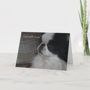 Cute Dog Get Well Gifts on Zazzle CA