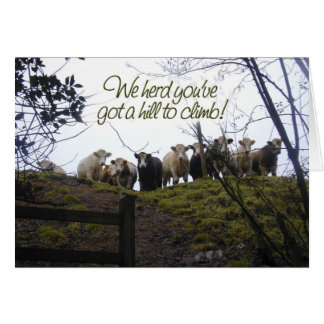 Get well soon. Cows. Card