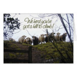 Get well soon. Cows. Greeting Card