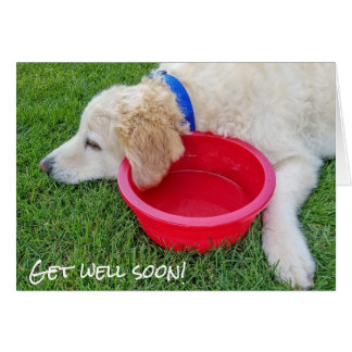 get well soon- dog with red water bowl card