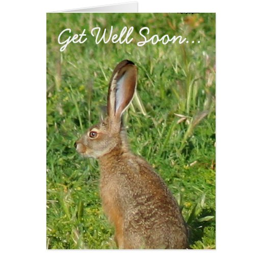 Get Well Soon Jack Rabbit Greeting Card